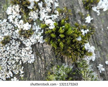 closeup from a moss plant on a tree