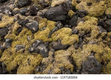 Closeup of Moss and Rocks at Londrangar, Iceland.
