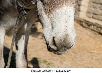 closeup of mouth of an innocent donkey in an animal farm
