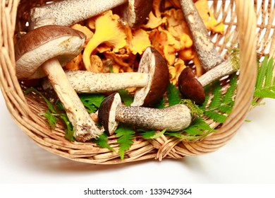 Close-up of mushrooms in a basket on a white background