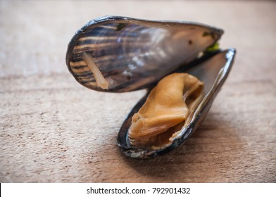 closeup of mussel on wooden background