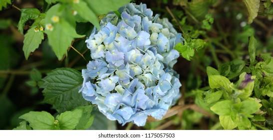 Closeup natural flower under summer sunlight in garden. Natural backgrounds or wallpapers.Dekstop Walpaper Photo.Flower of beauty. walpaper and background.