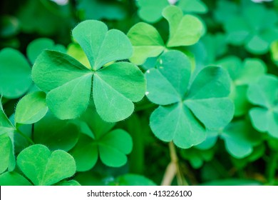 Closeup natural view of green leaf (clover) with copy space using as background or wallpaper.