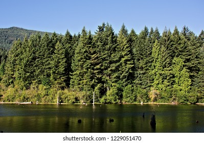 A closeup nature capture of a dense forest growing along the shores of the calm water of the lake shades of green color hillside under blue sky background deadhead of trees emerging out of the water
