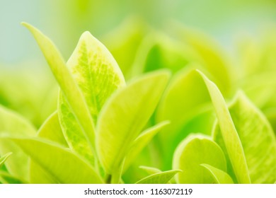 Closeup nature green leaf blurred and natural plants branch in garden at summer under sunlight concept design wallpaper view background with copy space add text.