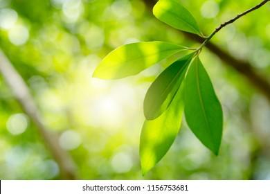 Nature Et Lumiere nature et lumière vert images, stock photos & vectors | shutterstock