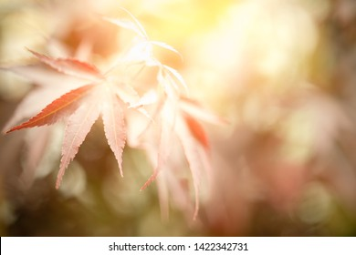Closeup nature view of autumn leaf on blurred background in garden with copy space for text using as background natural, wallpaper concept.