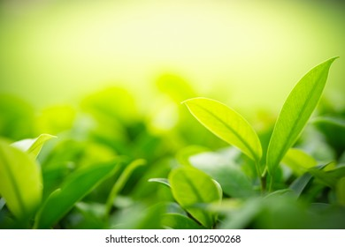 Closeup nature view of green leaf on blurred background in garden with copy space using as background natural greenery plants landscape, ecology, fresh wallpaper concept.