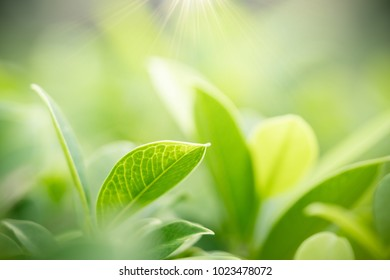Closeup nature view of green leaf on blurred greenery background in garden with copy space using as background natural green plants landscape, ecology, fresh wallpaper concept.