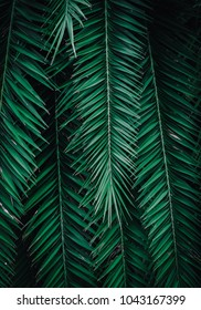 Closeup nature view of green leaf. Creative layout made of green leaves. Natural green plants landscape using as a background or wallpaper.