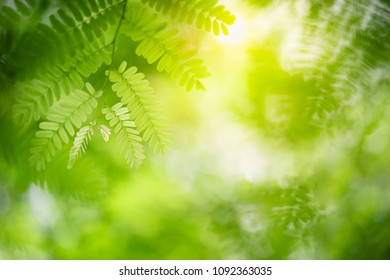 Closeup nature view of green leaf on blurred greenery background in garden with copy space using as spring or summer background, natural green plants landscape, ecology, fresh wallpaper concept.