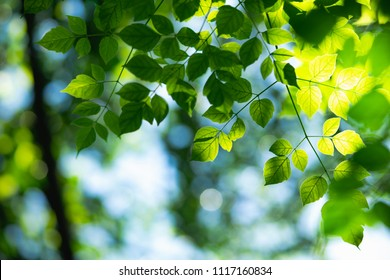 Closeup nature view of green leaf on sunlight with copy space using as background concept