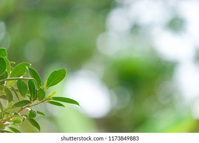 Closeup nature view of green leaf in garden with beautiful bokeh using as a background or wallpaper.
