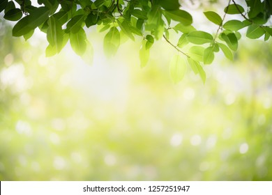 Closeup nature view of green leaf on blurred greenery background in garden with copy space using