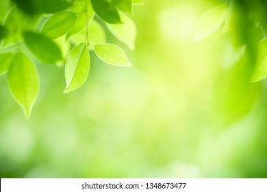 Nahaufnahme der Natursicht von grünem Blatt auf unscharfem grünem Hintergrund im Garten mit Kopienraum für Text, der als natürlicher Hintergrund Naturgrüne Pflanzen Landschaft, Ökologie, frisches Tapete-Konzept verwendet wird.