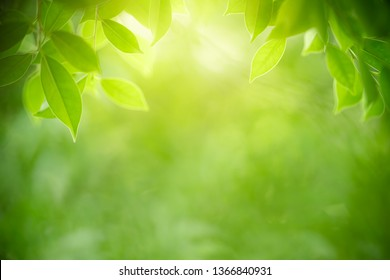 Greenery Wallpaper Stock Photos Images Photography