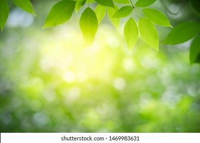 Nahaufnahme der Natursicht auf grünes Blatt auf unscharfem grünem Hintergrund im Garten mit Kopienraum als Hintergrund Naturgrüne Pflanzen Landschaft, Ökologie, frisches Tapete-Konzept.