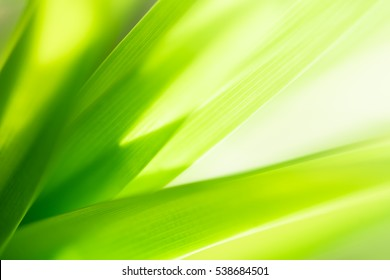 Closeup nature view of green leaf in garden. Natural green plants landscape using as a background or wallpaper.