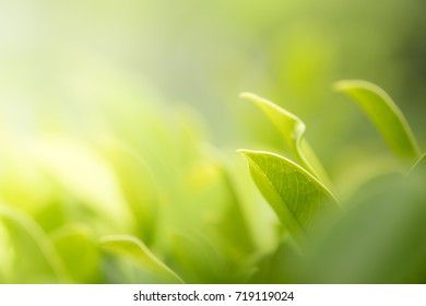 Closeup nature view of green leaf in garden. Natural green plants landscape using as a background or wallpaper concept.