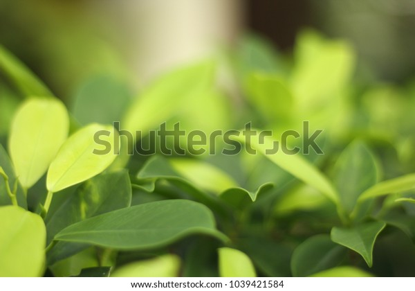 Closeup nature view of green leaf   under sunlight. Natural green plants landscape using as a background or wallpaper