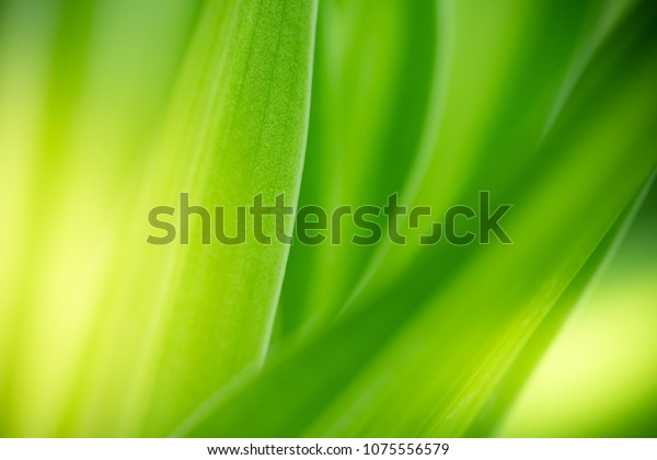 Closeup nature view of green leaf on blurred greenery background in garden at  morning sunlight with copy space using as background natural green plants landscape, ecology, fresh wallpaper concept.