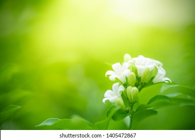Nahaufnahme der Natur auf unscharfem grünem Hintergrund im Garten mit Kopienraum für Text als Sommerhintergrund Naturgrüne Pflanzen Landschaft, Ökologie, frisches Tapete-Konzept.