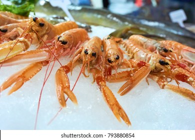 Close-up of Nephrops norvegicus also know as Norway lobster, Dublin Bay prawn, langoustine, langostino or scampi on ice