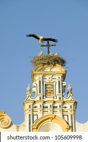Closeup of nesting European storks on white cathedral tower with beautiful sunlight in village of Southern Spain off highway A49 west of Sevilla