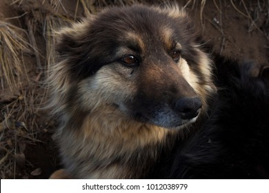 closeup nice dog watching atently