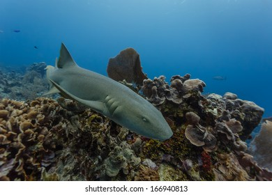 Close-up of nurse shark swimming on coral reef