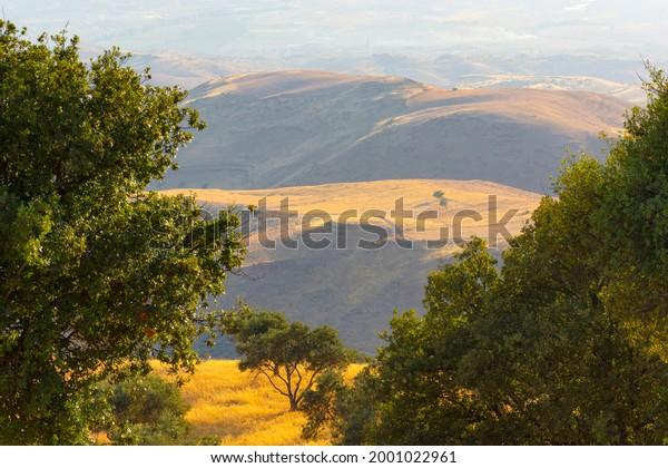 Closeup to Oak tree with mountain in Alsalt city in Jordan