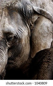 Close-up of old Asian Elephant at a large zoo - Background or Texture image.