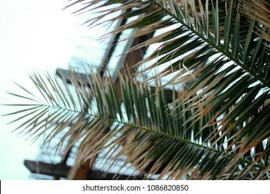 Closeup old dry palm leaf on blurry background. Mediterranean coast region.