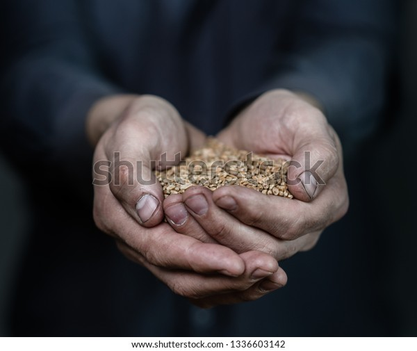 Closeup old peasant hands holding wheat handful