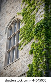 Close-up of an old university building, focus on an architectural window with ivy growing to its right side.  A slight vignette added.  University of Guelph, Guelph, Ontario, Canada