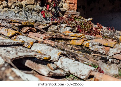 Close-up of old weathered roof tiles, with moss and ivy growing on them. Stigliano, Tuscany, Italy, Europe.
