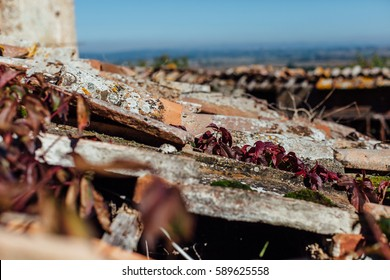 Close-up of old weathered roof tiles, on an old Tuscan roof in the midday sun. Italian countryside and sky in the background. Stigliano, Tuscany, Italy, Europe.