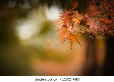 Closeup on autumn leaves with bokeh