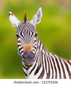 Closeup on beautiful zebra's head looking curiously and standing in savannah grass with sky in the background