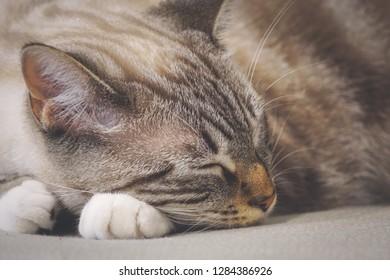 closeup on cat nap