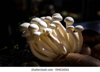 Closeup on edible white mushrooms growing in a dark area lited but the sun