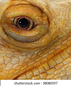 close-up on the eye of bearded dragon