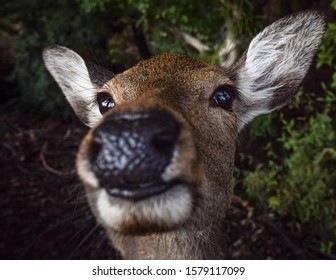 Close-up on a funny deer face in Nara, Japan.