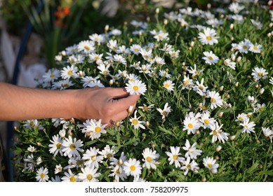 Closeup on hand holding fresh daisy flower natural abstract background