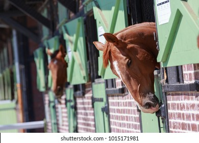 Closeup on Horses in the stables with heads outside