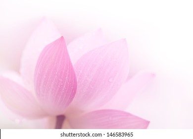 Closeup on lotus petal,Shallow Dof.