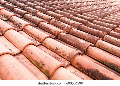 Close-up on moldy roof tiles in humid tropical climate in Malaysia