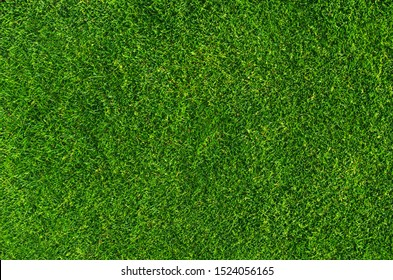 Close-up on natural lawn texture as background