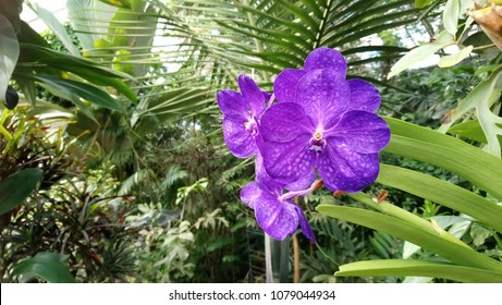 Closeup on purple Orchids flowers.