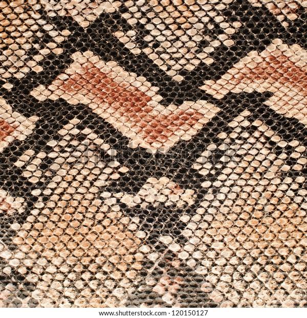 Closeup on snake skin pattern background.